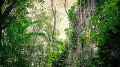Traveling Past Overgrown Rock Face In The Jungle Stock Footage