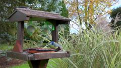 Bird feeders - Little wood house - birds, passerines, sparrow, tit 3 Stock Footage