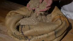 Traditional german baker checking wheat grains spotlight Stock Footage