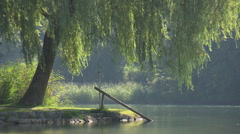 Weeping willow by a lake - stock footage