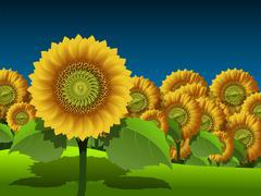 Sunflowers - stock illustration