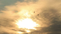 Stock Video Footage of Ravens fly high in the sky at sunset