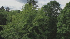 Fresh summer green forest tree aerial fly between way belarus Stock Footage