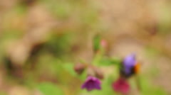 Multicolored wild flowers, a large insect, the young juicy green grass Stock Footage