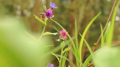 Red, purple, wild flowers green grass Stock Footage