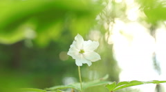 A Lone little white flower green grass Stock Footage