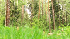 Summer. Deciduous forest. The sun plays with the leaves of birch - stock footage