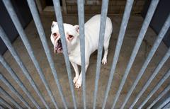 Animal shelter - stock photo