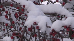 Beautiful snow on the tree branches after winter storm in Waterloo Stock Footage