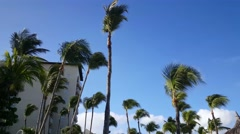 Stock Video Footage of Walking under the palmtrees at Palm Beach on Aruba