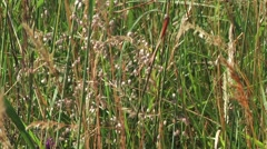 Wild grasses blowing in the wind Stock Footage