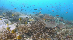 Coral reef with plenty of fish. 4k Stock Footage