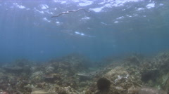 Sea snake on a coral reef with plenty fish 4k Stock Footage