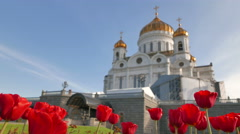 Red tulips on the background of the Cathedral of Christ the Savior. Moscow. - stock footage