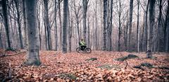 Mountain biker on cycle trail in woods Stock Photos