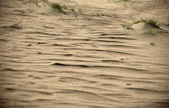 Dead Dunes in Neringa, Lithuania Stock Photos