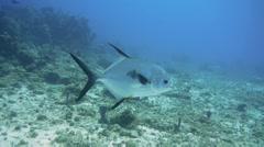 Big Fish-Cozumel-Mexico - stock footage