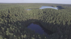 Pine forest sunset light lake shore aerial panorama belarus Stock Footage