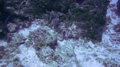 Lobster-Cozumel-Mexico - stock footage