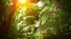Sunshine Streaming through Palm Fronds over a Natural Tropical Stream Stock Footage