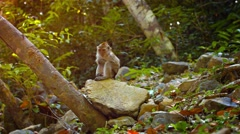 Adorable Monkey Scratches Himself while Sitting on a Rock Stock Footage