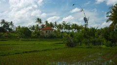 Typical Lowland Rice Paddies on a Farm in Bali, Indonesia Stock Footage