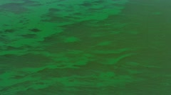 Environmental Effect of an Algal Bloom caused by Eutrophication Stock Footage