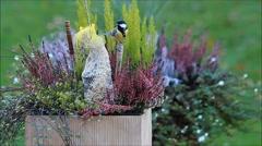 Bird seed in flower pot, great tit Parus major Stock Footage