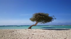 Divi divi tree at Baby beach on Aruba - stock footage