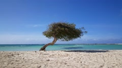 Stock Video Footage of Divi divi tree at Baby beach on Aruba