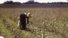 Man Farm Worker Picking Cotton in Field 1930s Vintage Film Home Movie 8527 - stock footage
