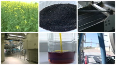Plant blooms. Rape seed oil biofuel production. Clip collage. Stock Footage