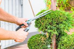 Hands, hedge trimmer and tree - stock photo