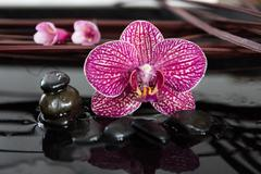 Stock Photo of Orchid and black stones