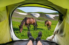 View from inside a tent on the horses and mountains in Georgia Stock Photos