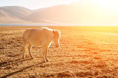 Horse at grass land - stock photo