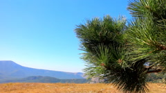 Hiking. Pine in the Alpine meadows Stock Footage