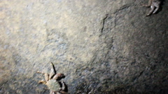 Many nimble crabs selected at night on the coastal rocks Stock Footage