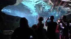 Spectators with Cameras at Underground Aquarium  4K Stock Footage