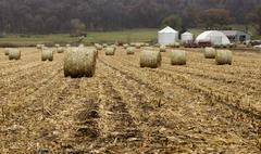 Round corn bales - stock photo