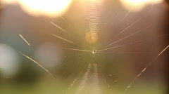 Stock Video Footage of cobweb on the nature background