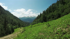Path in alpine meadows - stock footage