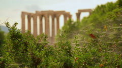 Antique architecture monument, columns of Olympian Zeus Temple seen at distance Stock Footage