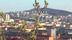 shrub willows over the city - stock footage