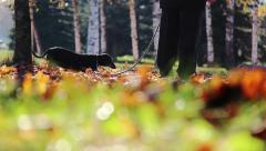 Dog walking on the autumn leaves Stock Footage