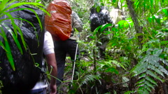 group of people tracking a tropical forest - stock footage