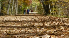 Walking trail covered in leaf litter Stock Footage