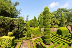 Exquisite bushes in the garden - stock photo