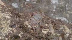 Crab Crayfish Rock Stock Footage