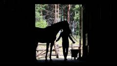 man trains a horse silhouette - stock footage